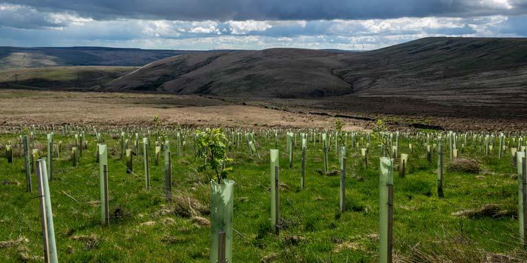 Tree planting near Gorpley Reservoir