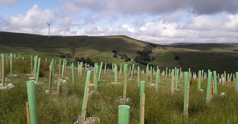 Plant trees on your land