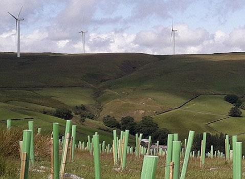 Newly planted trees near Gorpley Reservoir