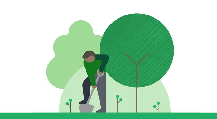 Tree planting illustration