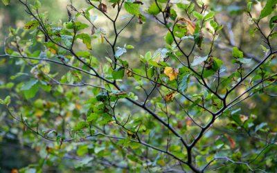 Help shape York's new community woodland